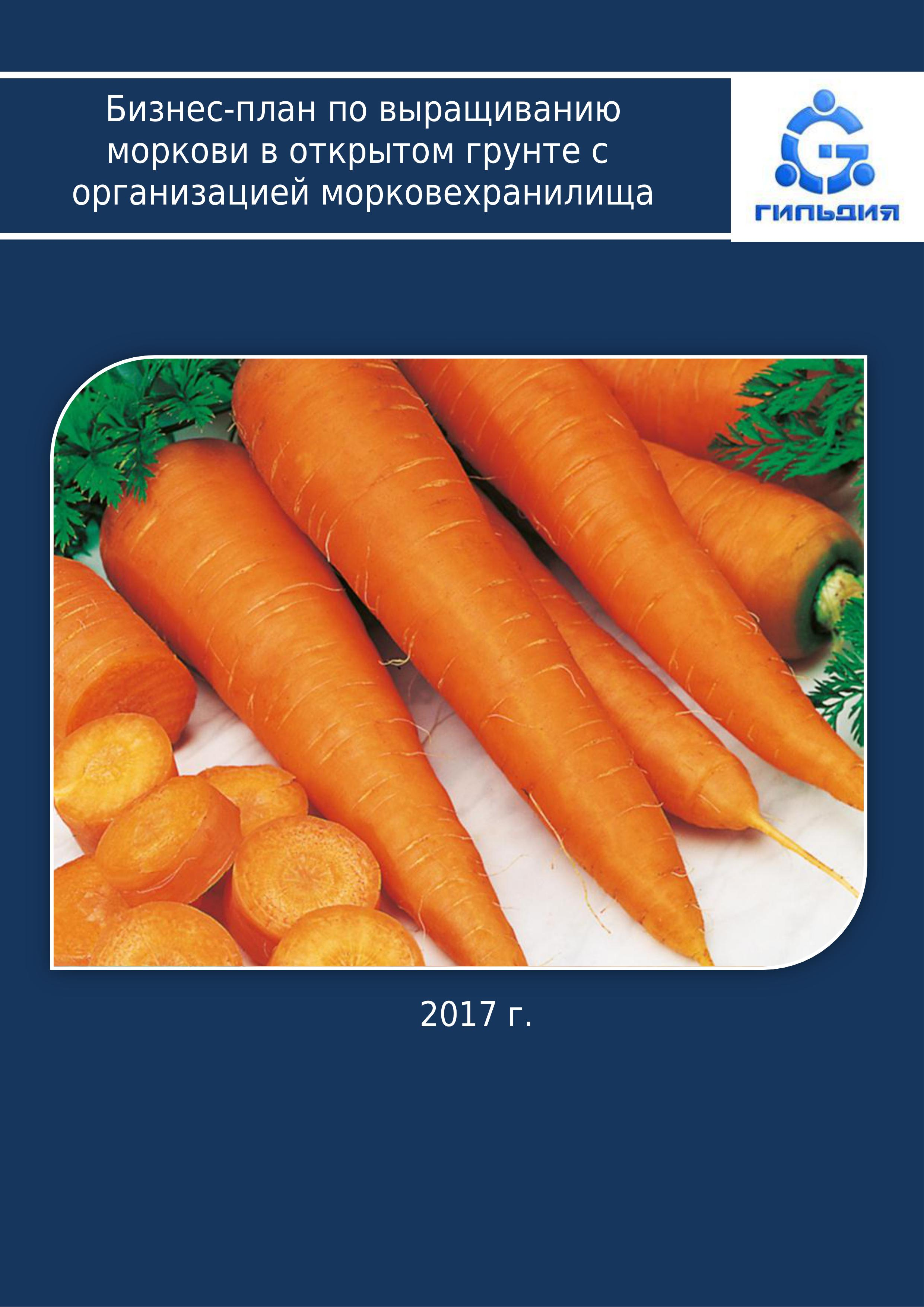 Бизнес на выращивании моркови 297