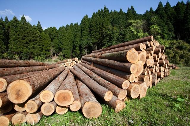Объемы выпуска круглых лесоматериалов в 1 квартале 2019 года.